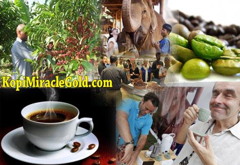 Kopi Gajah Thailand, Black Ivory Coffee Thailand,