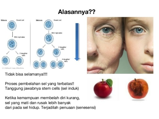 produk stem cell di indonesia